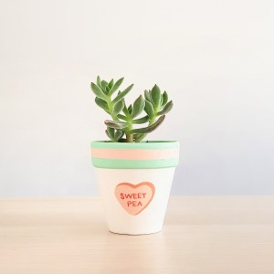 Sweet Pea Plant Pot with succulent