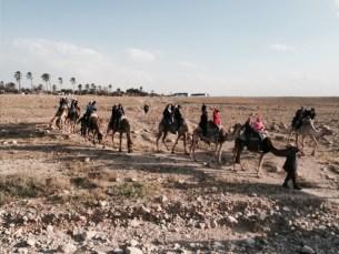 Israel-D2-camel