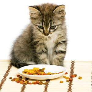 kitten-cat-food