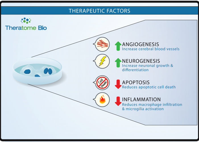 theratome-cell-graphic2