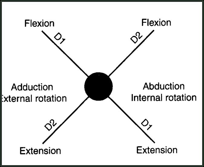 Upper Extremity D1 Flexion