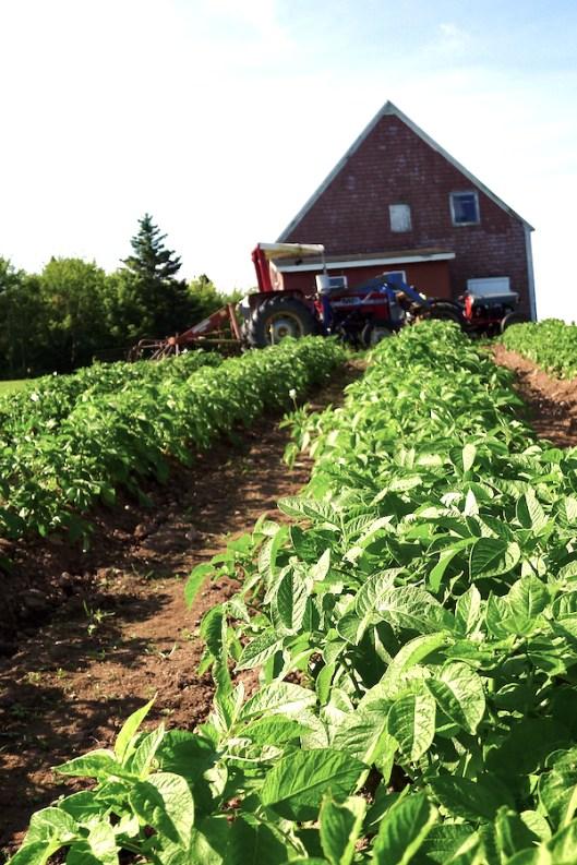 Cape Breton, Old Farm, Old Barn, Red Barn, Judique
