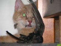 Hector, my ex-cat