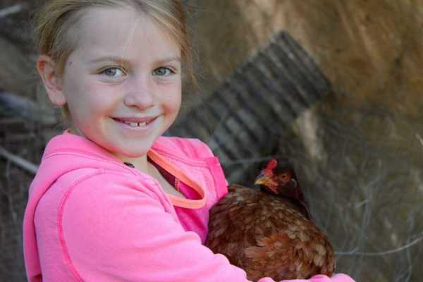 Girl with Buckeye Chicken | https://therealfoodrds.com/10-great-reasons-to-keep-backyard-chickens/