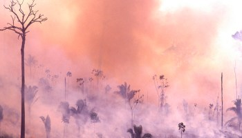 The Amazon is Burning at a Record Rate