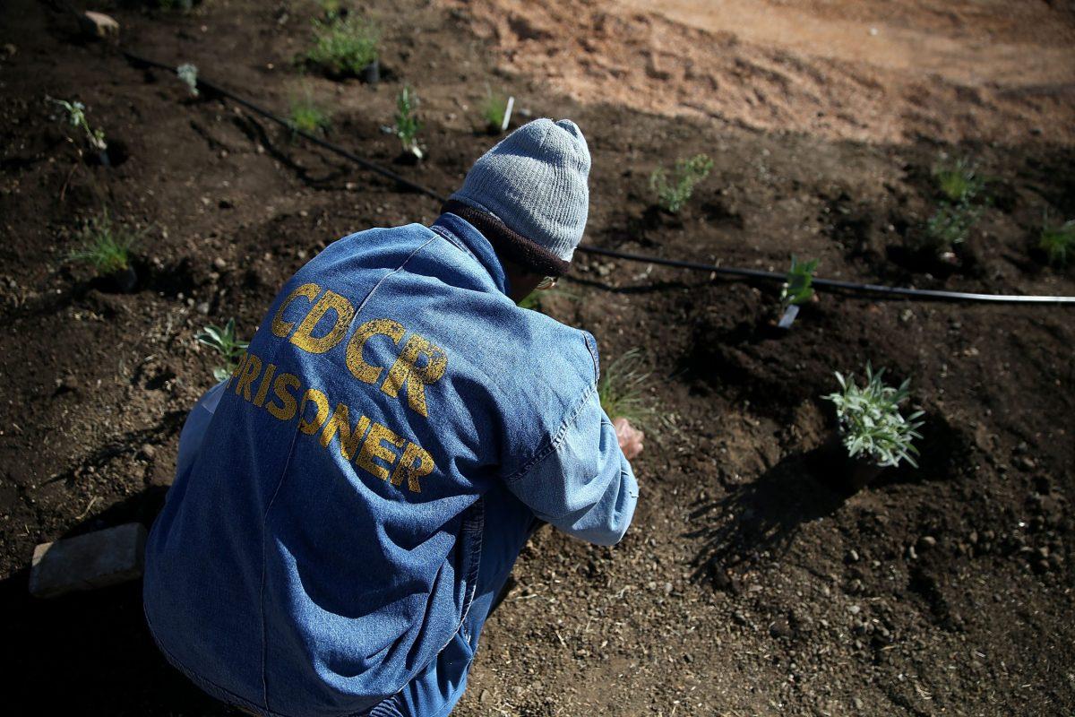 A California State Prison-Solano inmate installs a garden