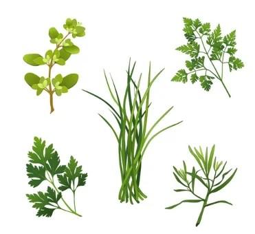 Fines Herbes - Onlinerecipe.website