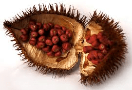 Achiote - Spices at TheRecipe.Website