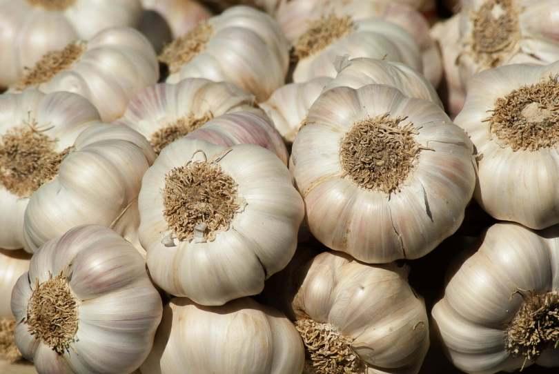 Garlic - TheRecipe.Website
