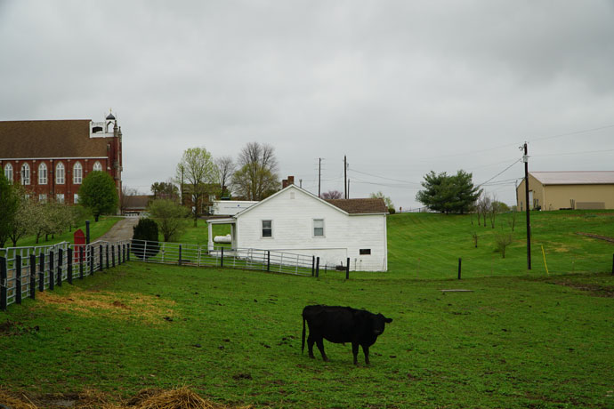 A cow grazed in a pasture on St. Catharine Farm on a recent overcast Spring day. The Motherhouse of the Dominican Sisters of Peace can be seen to the left. (Record Photo by Jessica Able)