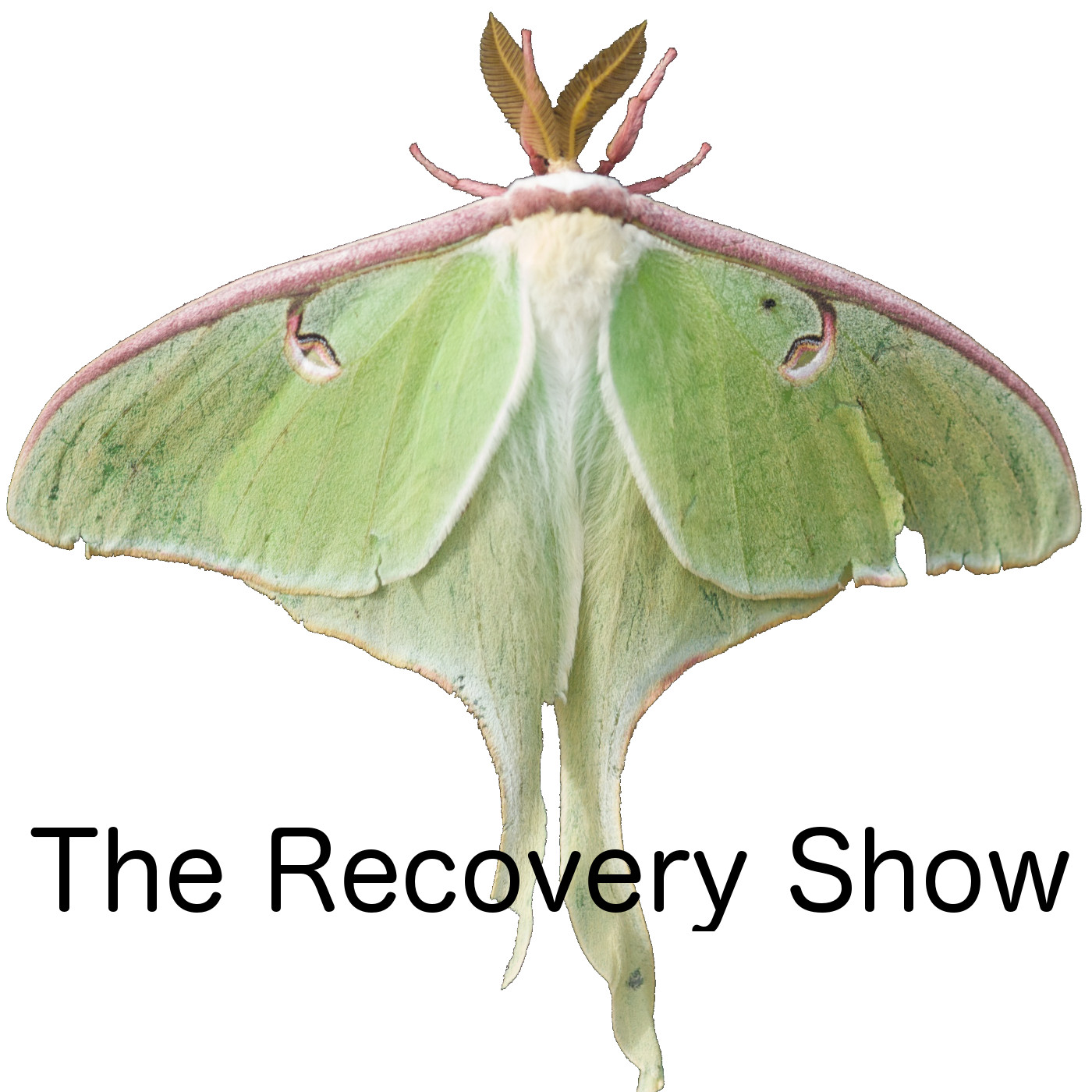 The Recovery Show Finding Serenity Through 12 Step Recovery In Al Anon A Podcast