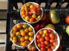 Harvest from SLU's Garden