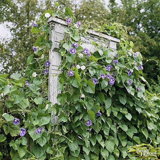 easy diy landscpaing projects flower trellis