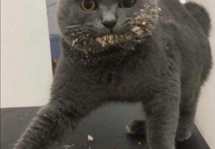 Cat with cake