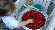 Choke Cherries are called Choke cherries for a reason...