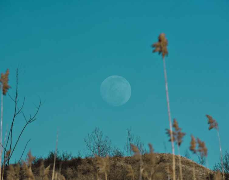 full moon on blue sky under hill with dry trees
