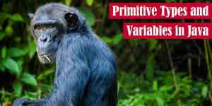 Primitive Types and Variables in Java Featured Image