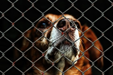 animal-welfare-1116203_640-1
