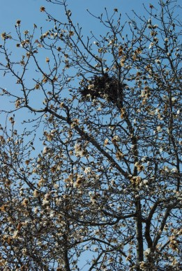 Nest in flowering tree