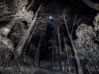 Where the trees arched above and the branches were the sky. Road heading to distance. Tall trees on either side. Moon in the middle. Night landscape image.