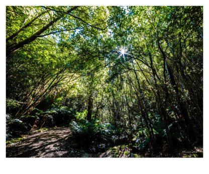 Bushland in Hobart, Tasmania, Australia. Photographer: Theresa Hall.