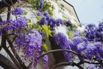 Spring in Bozen