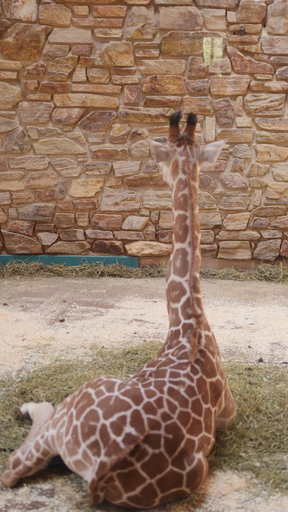One of the giraffes recently had a baby calf named Willow! You can see her through a window in a special enclosure.