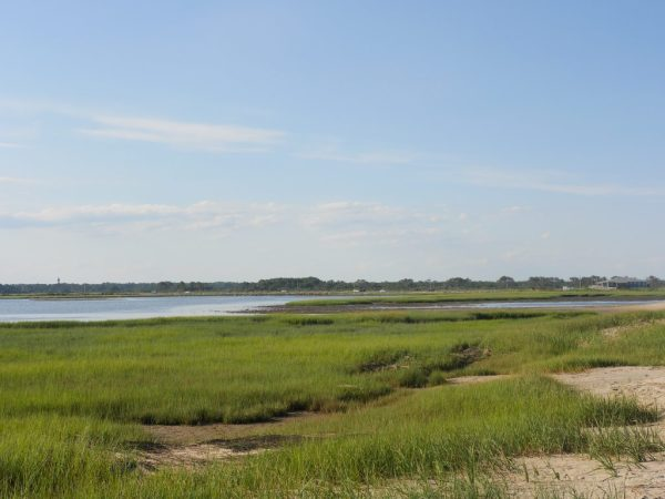 The natural backdrop at Assateague Island National Seashore