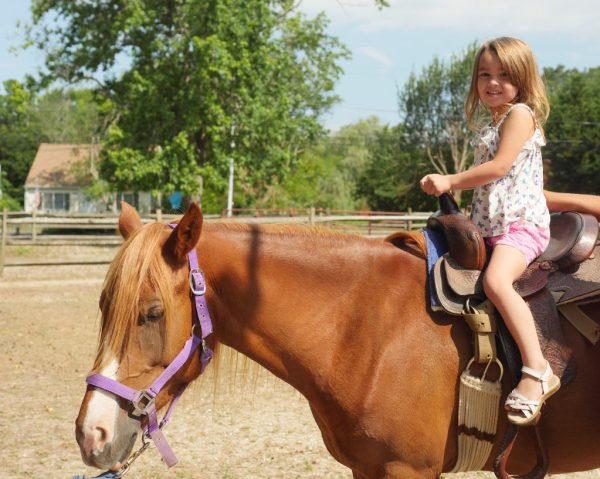 Chincoteague Island has wild ponies, but you can also do pony rides at the Chincoteague Pony Centre!