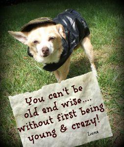 Pet Rescue Photo Art