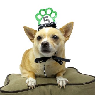 Green Dog Birthday Crown