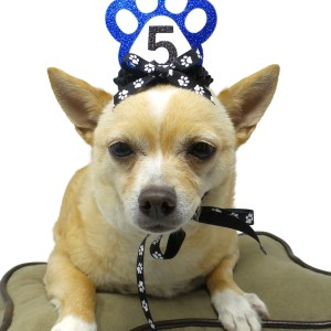 Blue dog birthday crown, MIsfit Manor, dog party favors