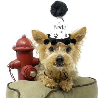 Dog Party Hat, Misfit Manor Shop, Size Small