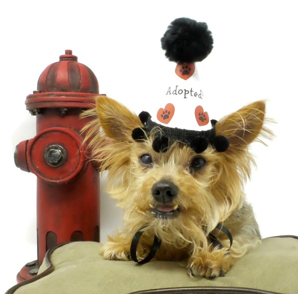 Dog Adoption Party Hats, Misfit Manor Shop