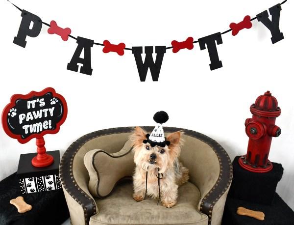 Custom Dog Birthday Hat, Personalized Dog Birthday Hat, Misfit Manor Shop