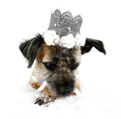 Dog Crown, MIsfit Manor Shop