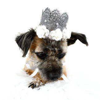 Dog Crown, MIsfit Manor Shop