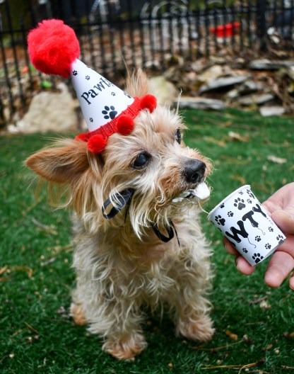 Pupperccino Cups, Dog Party Favors, Dog Birthday Party, MIsfit Manor Shop