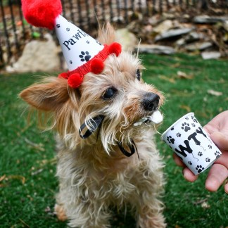 Dog Party Kits