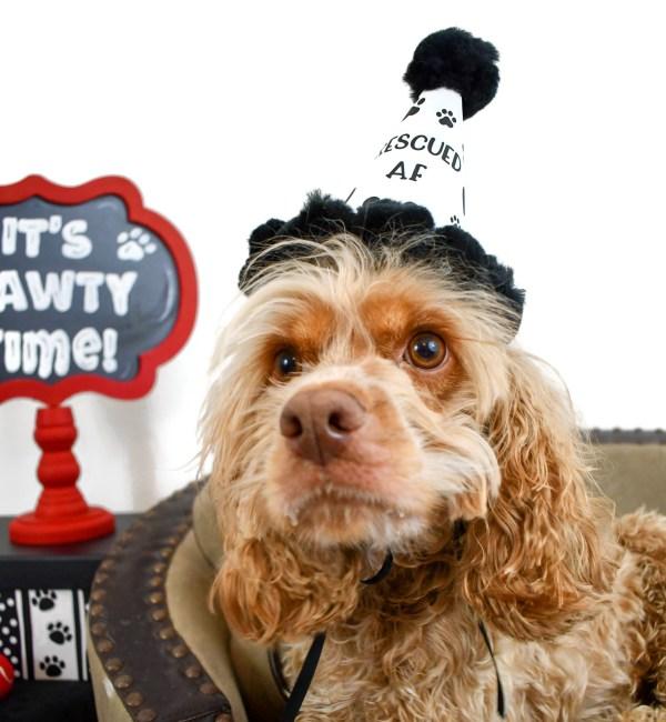 Dog Adoption Party Hat, Misfit Manor Shop