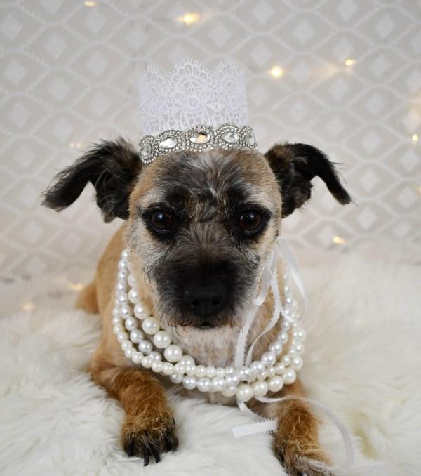 Dog Wedding Attire, Misfit Manor Shop