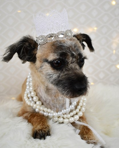 Dog Wedding Attire, Misfit Manor Shop