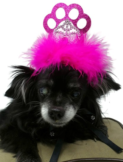 Dog Birthday Crown, Misfit Manor Shop, Nancy Halverson, Dog Party Favors