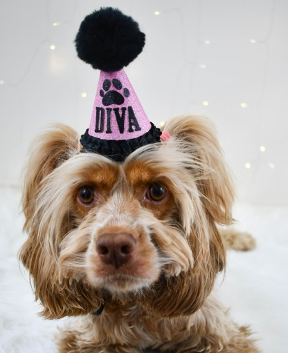 Pink Dog Birthday Hat, The Misfit Manor Shop