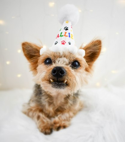 Personalized Dog Party Hat