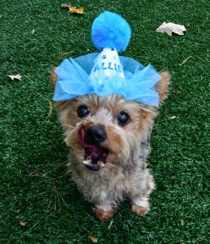 Dog Birthday Hat, Misfit Manor Shop