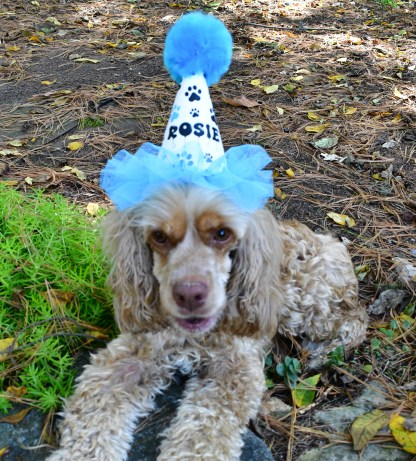 Paw Print Party Hat