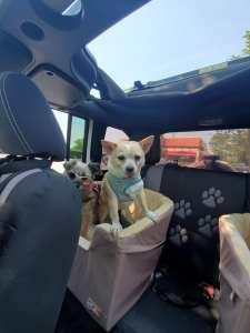 Misfit Manor, Nancy Halverson, dog mom life, jeeping, jeep life, jeep dog