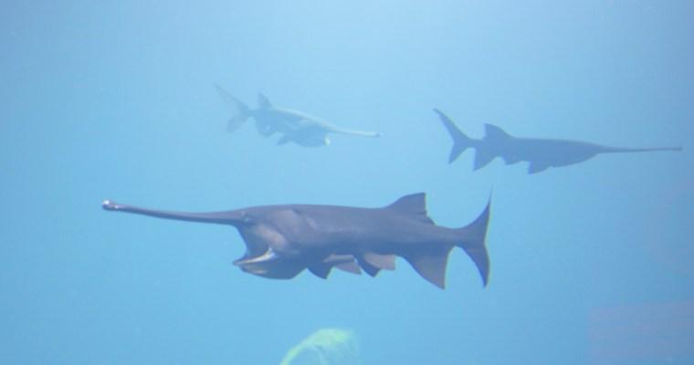 Un  après midi pluvieux dans le plus grand aquarium d'eau douce