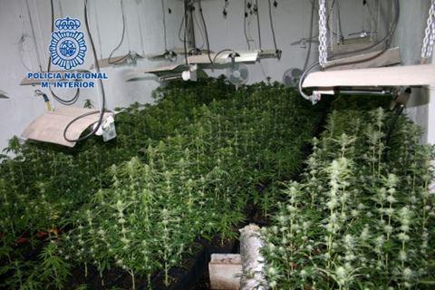 Cannabis Farm in Malaga